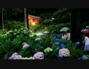 2012年京都に行ってきた(52)【三室戸寺・紫陽花ライトアップ】