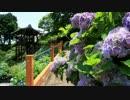 2012年京都に行ってきた(53)【紫陽花の善峯寺】