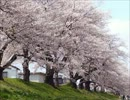 [デスト] 千本桜を歌ってみた 2