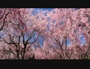 【軽量版】2012年京都に行ってきた(16)~(18)