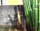 犬に追われてサボテンに登っちゃった猫ちゃん