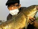 【ニコニコ鯉釣りダービー】藻煮た、暫定