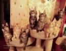 史上最多!?シンクロする子猫たち