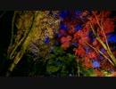 笠置山自然公園・ライトアップ(2012/11/18)