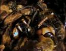 ミツバチの巣に侵入したスズメバチの悲惨な結末