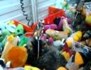 海外のペットショップに設置されていた猫が景品のクレーンゲームwww