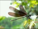 蜻蛉.wmv