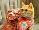 ペット用着物を作ってみた