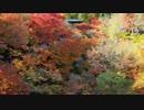 2012年京都に行ってきた(91)【紅葉の東福寺】