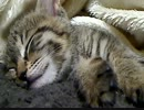 子猫のレオねんね