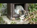 お食事中の猫神さま