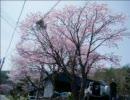 aikoで「春よ、来い」