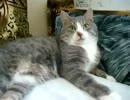 うざいインコにいい加減切れる猫www