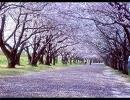 【ニコラップ】I Am In Spring Too