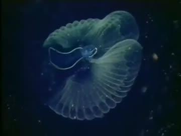 海・知られざる世界「めぐる生命の輪」(02 of 02)