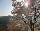 気の向くままに奈良県内ぶらついてみた-吉野山Part1 下千本