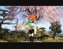 【舞々】 千本桜 【踊ってみた】