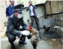 【新唐人】南京で家禽殺処分 損失は市民が負担