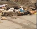 【新唐人】河南省の村で豚や犬が大量死