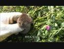【農2】閲覧注意 畑で捕まえたネズミを調