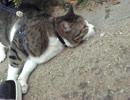 猫を散歩に連れて行ったら無慈悲なマジ切
