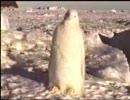 真っ白いペンギン!!!