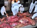 【新唐人】村職員 病死した豚の肉40トンを販売