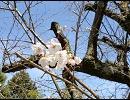 気の向くままに奈良県内ぶらついてみた-吉野山Part3 奥千本