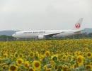 【PV風】女満別空港 ひまわり 2012【映像集】