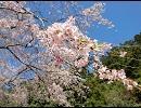 気の向くままに奈良県内ぶらついてみた-吉野山Part4 中千本