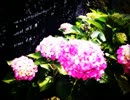 rain stops,good-bye 歌ってみた-零 feat.東風 thumbnail