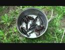 【自然を食べよう!】ザリガニ料理編 1/2 【おまけ動画有り】