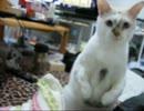 【ミィ】かまってほしい猫【part1】