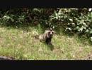長野の田舎道ドライブ その33 林道への道中で猛獣と遭遇編