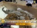 【新唐人】3万9千年前のマンモス 横浜で初公開