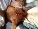 朝起きたらネコが俺の布団で寝てるだけ。