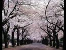 【BEMANI】Sakura Reflection (U-sk Remix)
