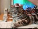 【レオ★ララ】 猫をどかす作戦