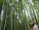 【めさの休息】嵐山のオススメコースを紹