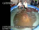 ゆっくり動物雑学「九州で食べられていたエイが…」