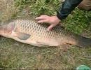 【ニコニコ巨大魚釣りダービー】 ど素人が釣り実況してみた その16
