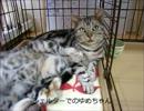 はじめての猫飼い071 ~3本半の猫・ゆめ