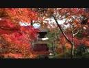 京都の紅葉(2013/11/27)
