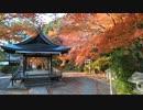 京都の紅葉(2013/12/1)