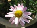 【フジファブリック】花をコピってみた【アコギ】