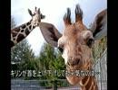 ゆっくり動物雑学「キリンが首を上げ下げしても平気なのは…」