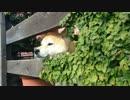 鉢犬の日常5
