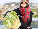 野菜収穫動画