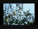 【UTAUカバー】春に一番近い街【雨月】
