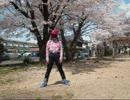 桜の下で Spring Shower 踊ってみた thumbnail